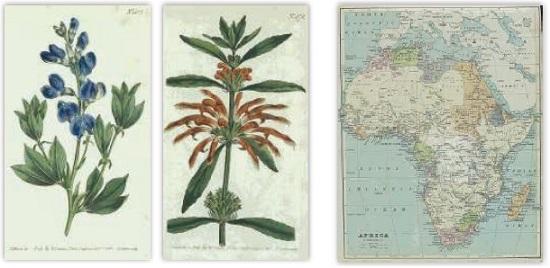 ボタニカル・マガジン/1880年代のアフリカ地図