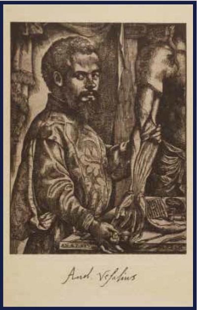 Andreas Vesalius the Reformer of Anatomy