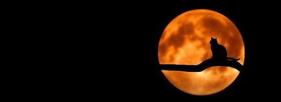 お月見クラシック