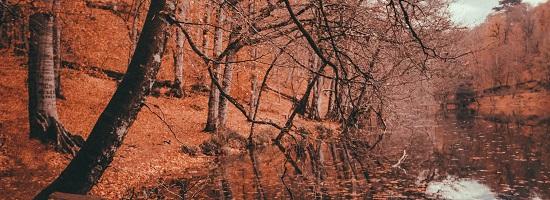 秋を感じるクラシック音楽
