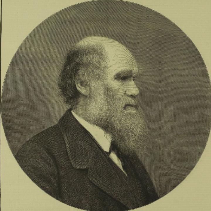 ILN_Darwin